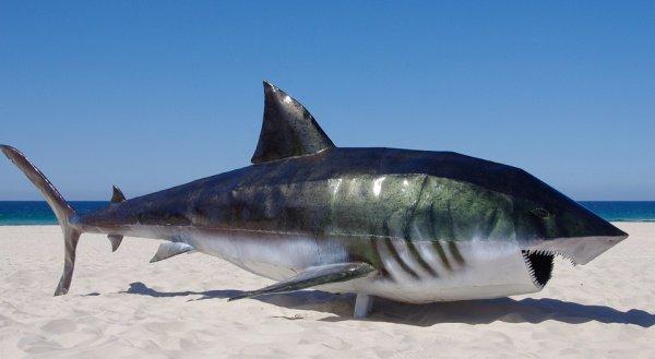Ежегодно власти прибрежных стран фиксируют около 100 нападений акул на человека