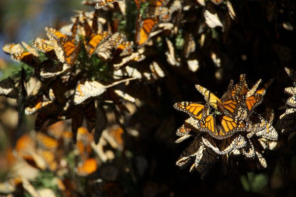 Деревья защищают насекомых от холодных дождей и формируют подходящие условия для спячки