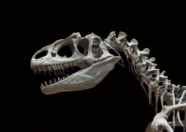 Ученые планируют продолжить археологические работы в Исчигуаласто