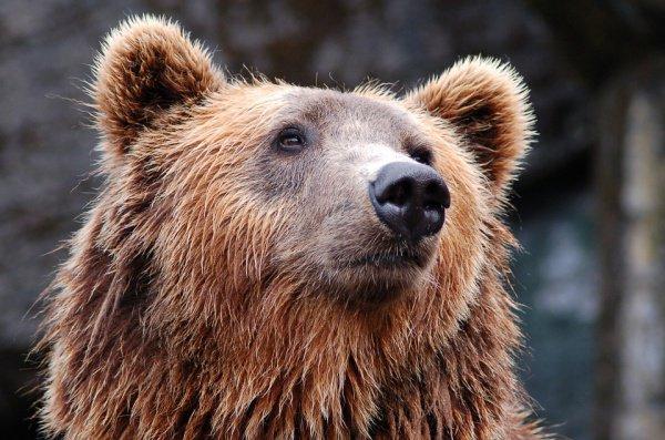 В частности, на первую позицию по опасности египетский журналист поставил бурого медведя