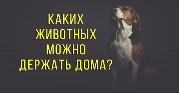 Почему в Исламе запрещено держать дома собаку?