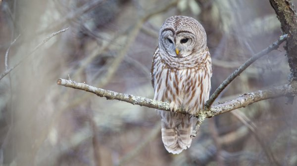 Специалисты будут собирать перья рядом с гнездами, чтобы сделать анализ ДНК (Фото: Philip Brown/Unsplash)