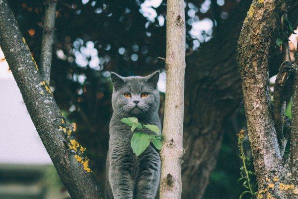 Проект «Питомцы Mail.ru» изучил данные порядка 18 тыс. владельцев кошек