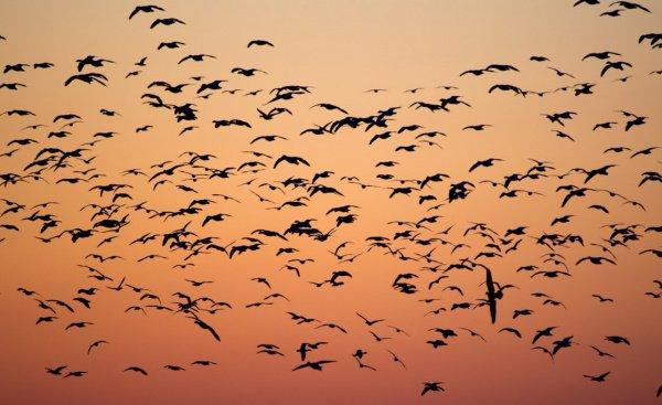 В общей сложности исследователи определили изменения в численности 529 видов пернатых, что составляет порядка трех четвертей всех видов и 90% всей популяции птиц