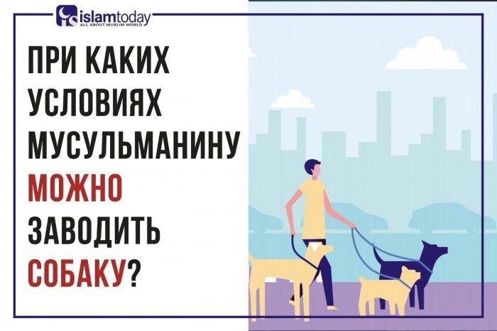 Какое место отведено собаке в Исламе? (Источник фото: freepik.com)