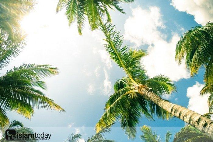 Мудрость хадиса о пальме. (Источник фото: unsplash.com)