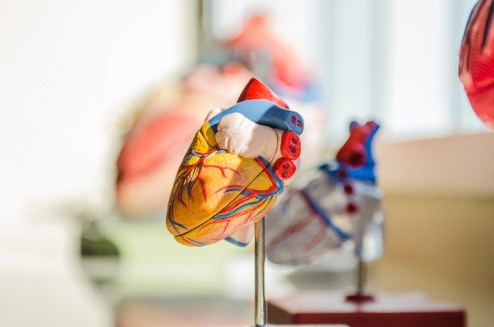 На проблемы с сердцем также может указывать боль в ногах