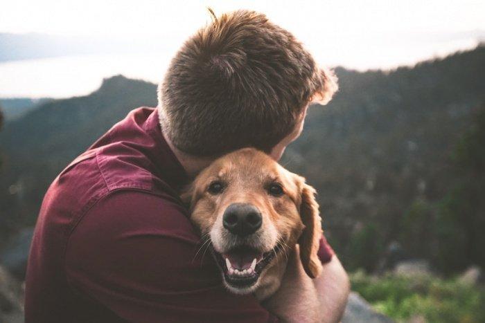 Вирус, по словам ветеринара, поражает дыхательные пути, кишечник и брюшную полость животных