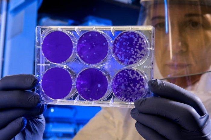 Специалисты исследовали образцы различных мутаций коронавируса от 11 случайных пациентов с коронавирусом