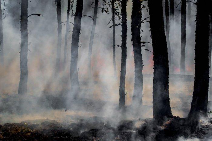 Согласно данным Рослесхоза, с начала года было потушено 5696 пожаров