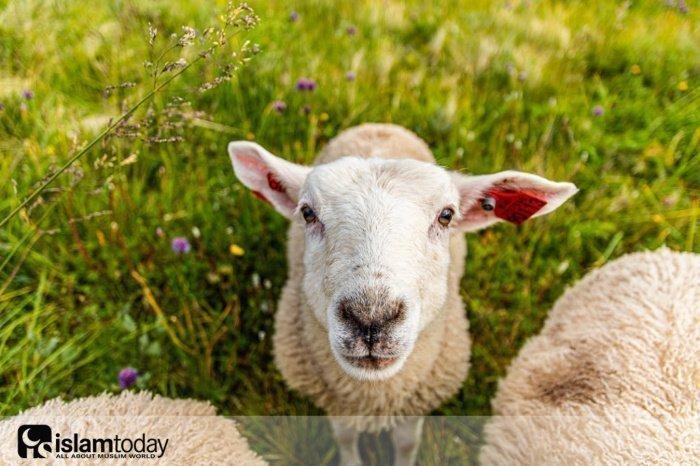 Что сделать со шкурой жертвенного животного? (Источник фото: unsplash.com)