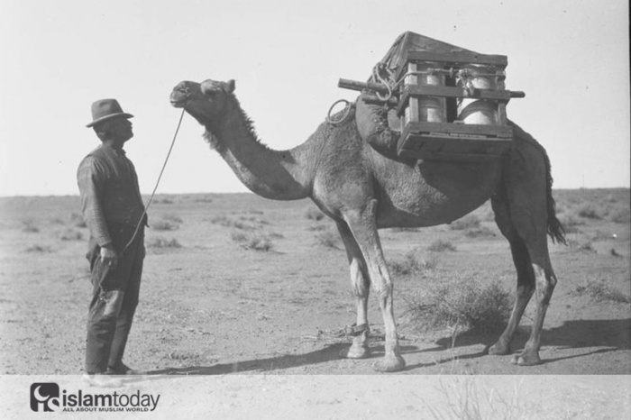 Человек с вьючным верблюдом в центральной Австралии, 1926 год.