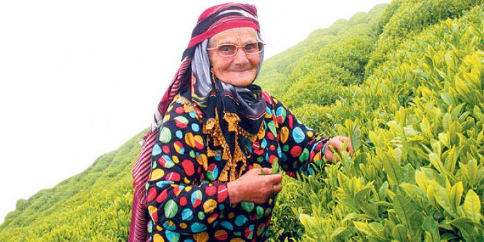 Лазская женщина на сборе чая