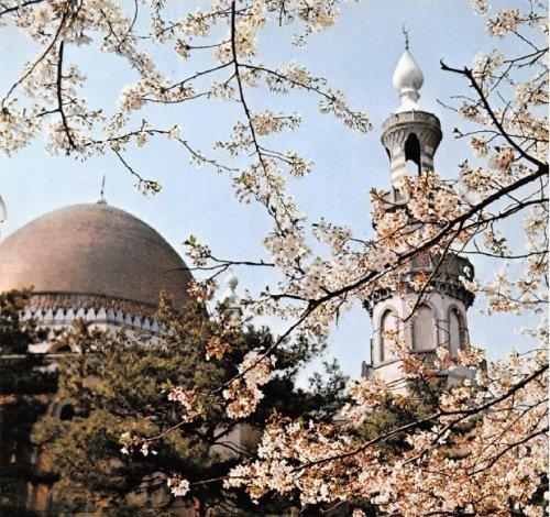 Токийская мечеть, построенная татарами, во время цветения сакуры