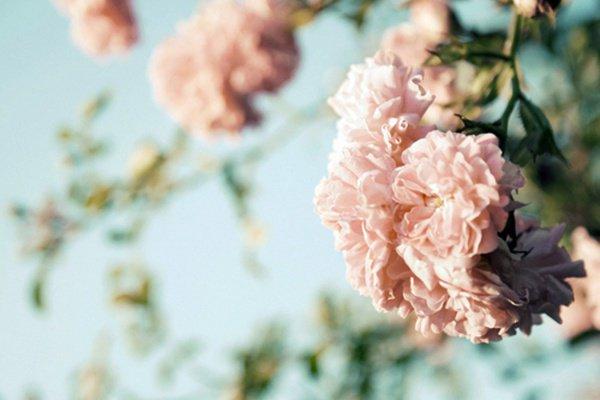 Аллах – Прощающий, Милосердный