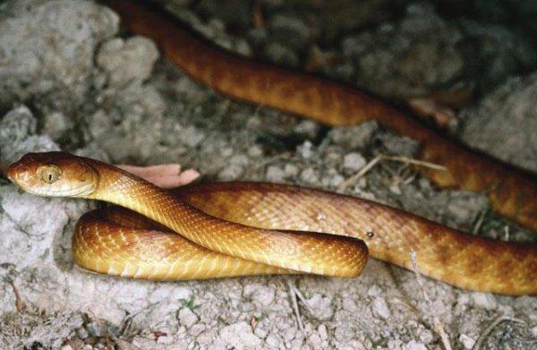 """""""Эти змеи являются результатом его деяний"""""""