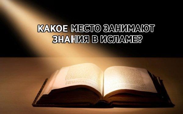 Высказывания о достоинстве знания