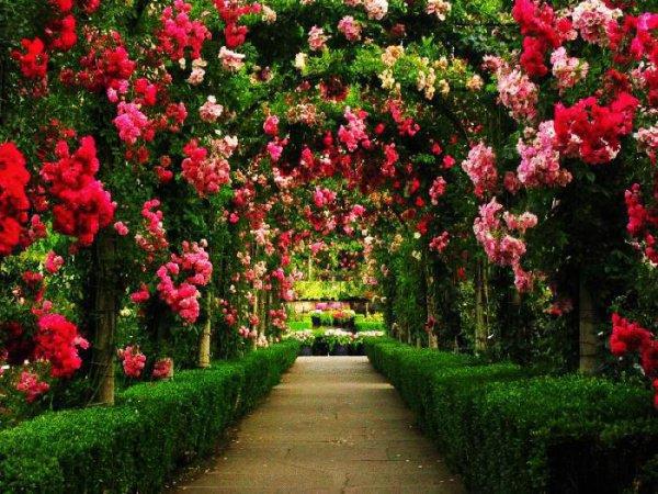 """""""И для твоей уммы тоже сделаю его цветочным садом"""""""