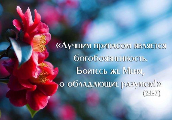 сура «Бакара», аят 197