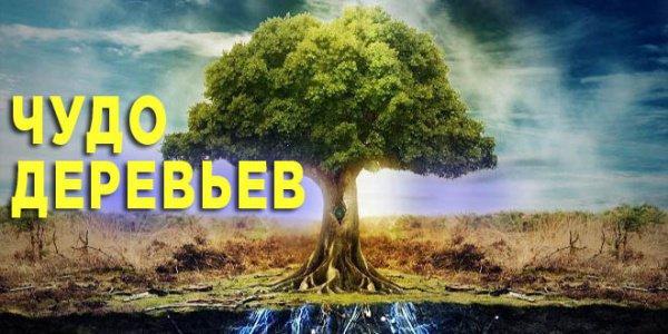 Роль деревьев в исламе