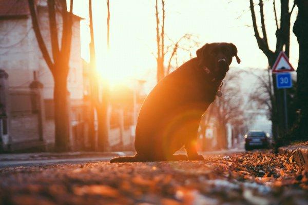 Последние 13 лет пес обитал на пятачке перед светофором на улице 50 лет Октября в Твери
