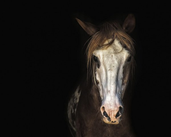 400900-INNERRESIZED600-600-horse-3198112