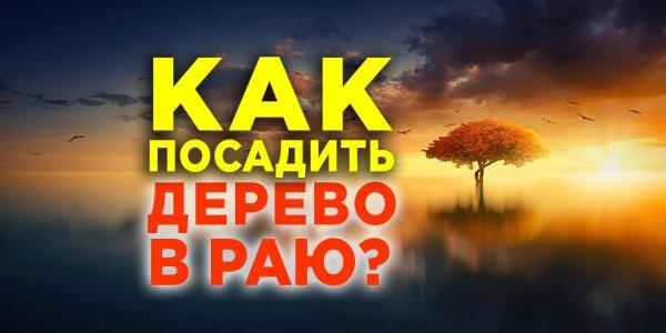 Как посадить дерево в раю уже при жизни?